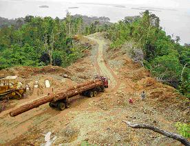 Logging activity in the Marovo lagoon, Solomon Islands. (Courtesy: SPREP)