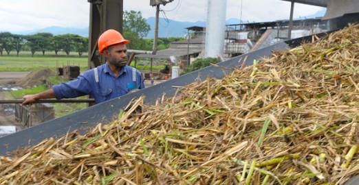 Harvesting sugar cane in the Markham Valley Credit: RAI