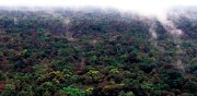 PNG's pristine rainforest. Credit: ABC/UPNG