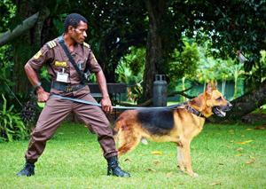 Guard dog. Source: Guard Dog