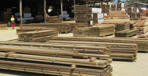 Forestry Archives - Business Advantage PNG