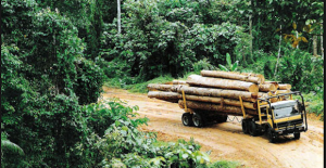 US-China trade war creating uncertainty in forestry sector, says Papua New Guinea Forest Industry Association