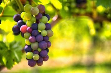 Treasury Wine