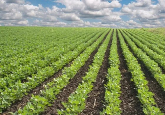 Diversification in agric sector requires actions, not talks — Sen. Adamu
