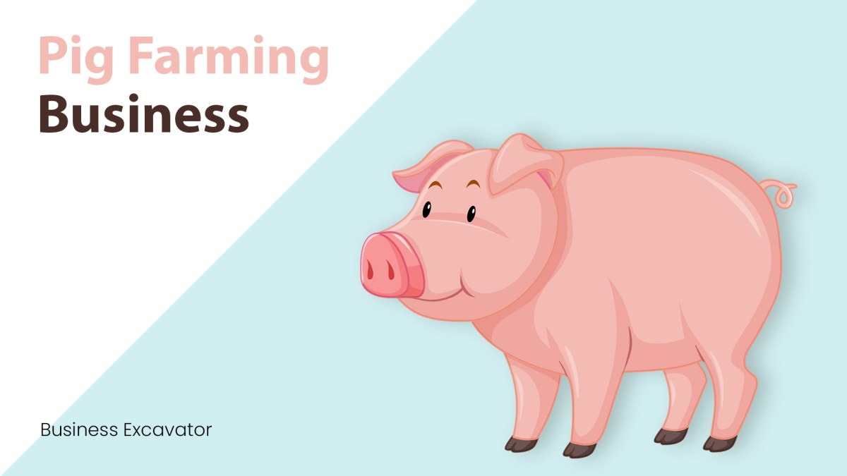 How to Start and Successfully Run a Pig Farm for Beginners