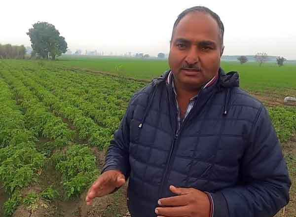 Agriculture Success Story of farmer Raj Kumar Arya This technique of planting potatoes made the farmer rich