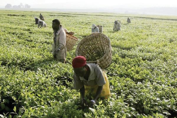 Image result for agriculture nigeria: medianet.info