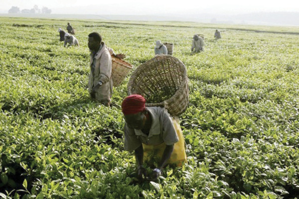 Image result for agriculture nigeria