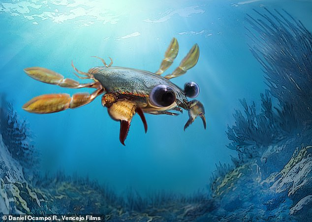 An ancient sea creatures is being called the platypus of crustaceans for its vary physical attributes.