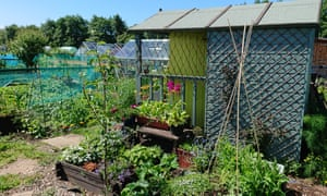 Beautiful shed, Kilwinning, Ayrshire: from allotment callout 2019