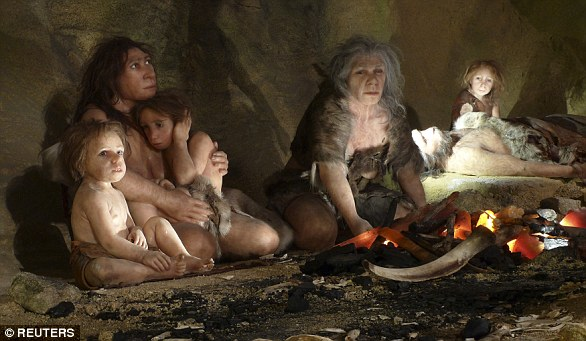 The Neanderthals were a cousin species of humans but not a direct ancestor - the two species split from a common ancestor -  that perished around 50,000 years ago. Pictured is a Neanderthal museum exhibit