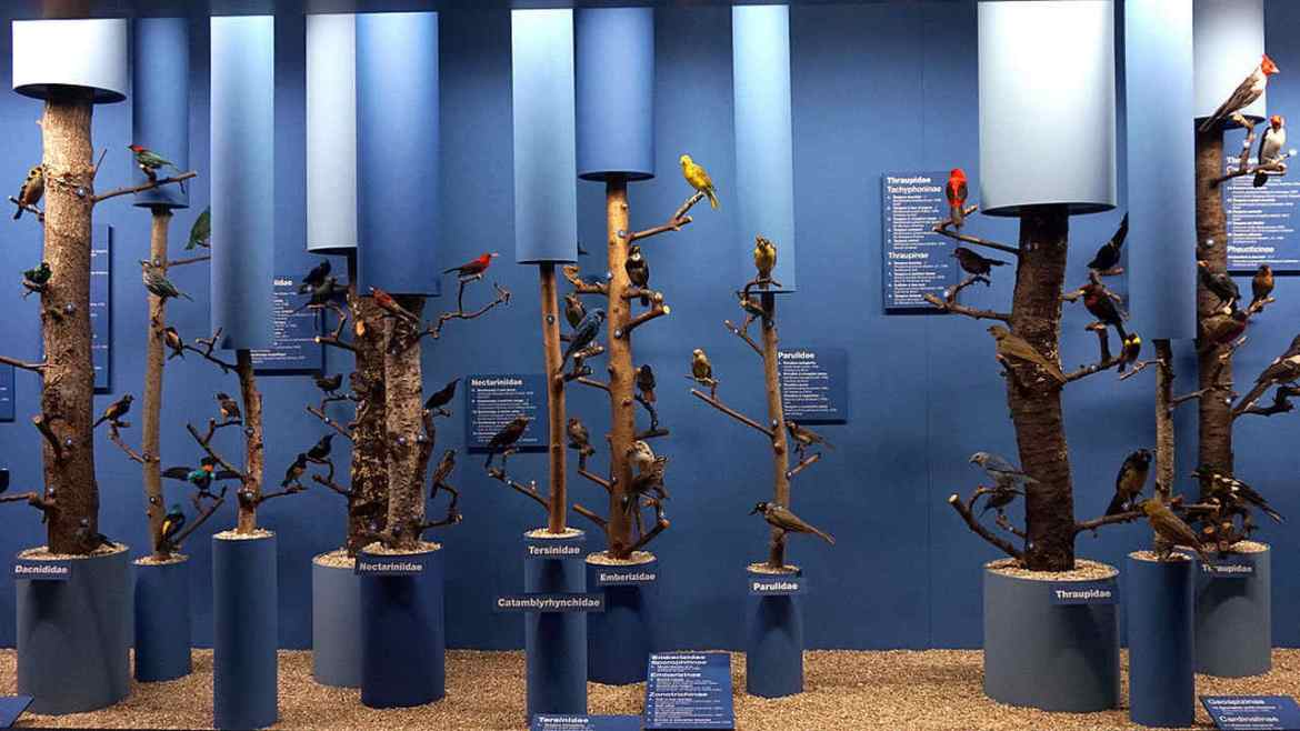Animal, bird collections in museums mostly made of male specimens finds a new study