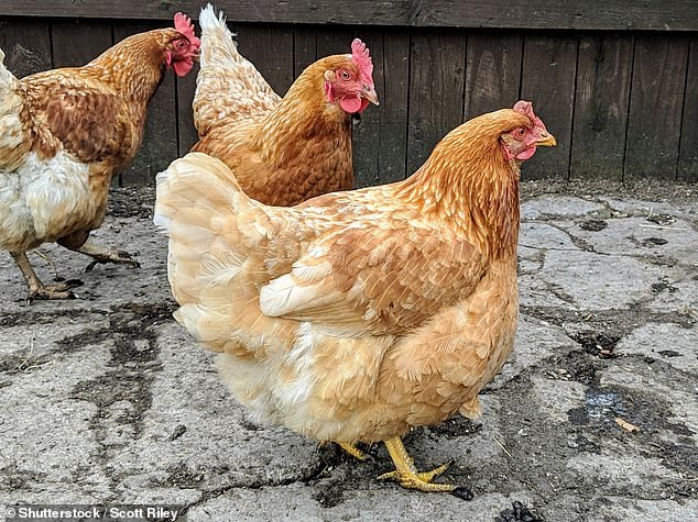 Chickens were originally associated with an Iron Age god akin to Roman Mercury, and hares with an unknown female hare goddess