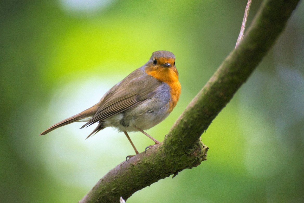 photo of a small bird on a branch