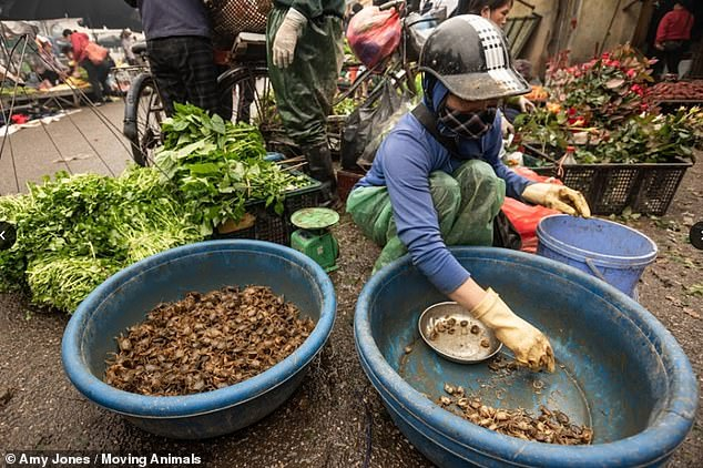 A worker is shown here transferring crabs between pots. They have exposed skin and do not appear to be wearing an apron