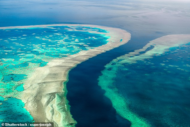 More than half of the corals on the Great Barrier Reef have been lost to 'bleaching' due to climate change over the last 25 years, a study has found Pictured, a coral on the reef