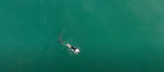 An extremely close encounter (Surf Life Saving NSW/YouTube)