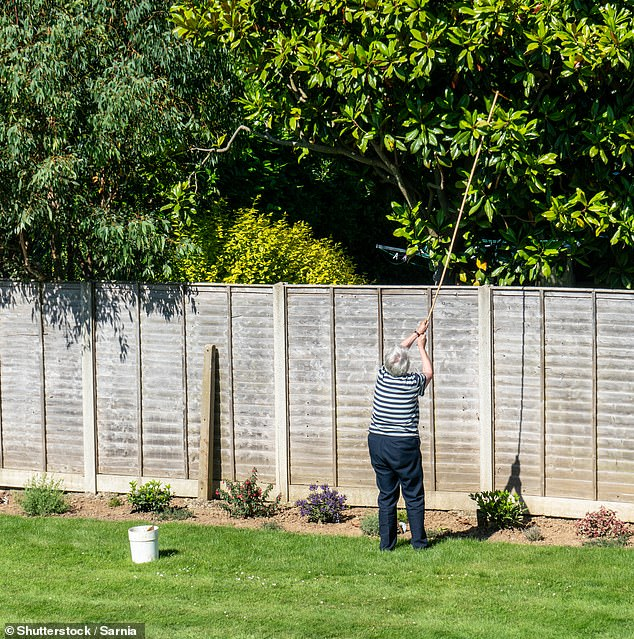 Leaf beef: Unless you are in a conservation area or the tree is protected under a TPO, you have the right to cut back any overhanging branches of the tree that encroach upon your property