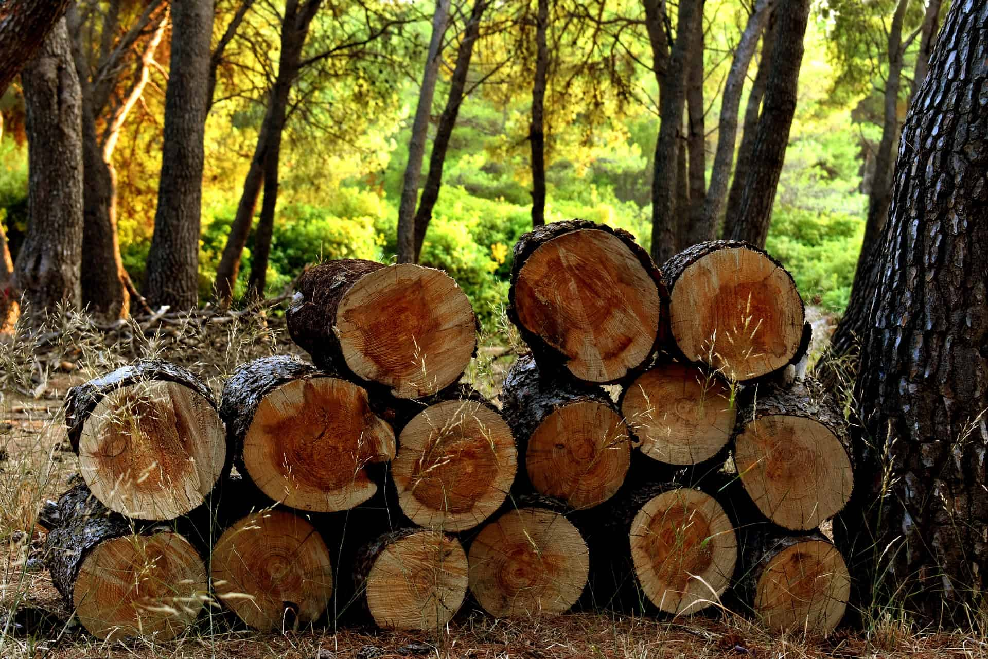 Malaysian Timber Industry: A Promising Future - Business Today