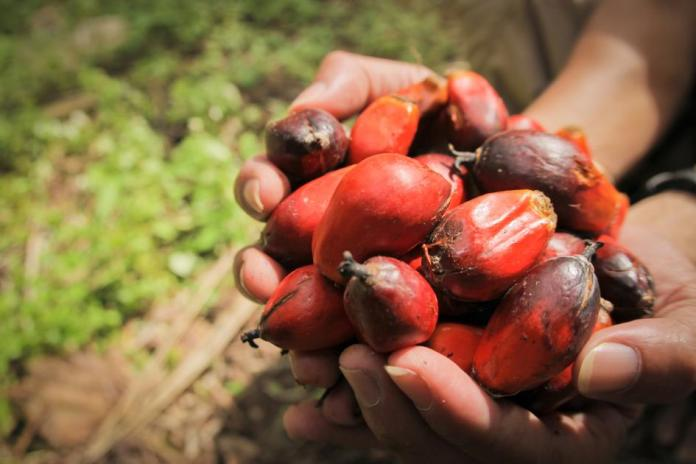 Fitch Research Raises Palm Oil prices to RM3,400 in 2021