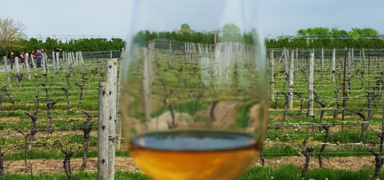 Appreciating Wine: Winery Tour at Niagara-on-the-Lake Trius Winery