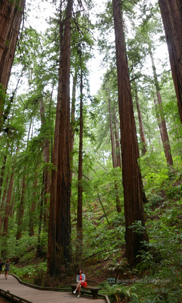 sights to see in san francisco muir woods national monument redwood
