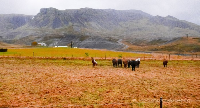 5-Day Itinerary For An Epic Iceland Self-Drive Tour Getting Lost in Iceland icelandic horse