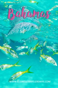 Pinterest An Unforgettable Snorkeling Tour with Stuart Cove's at the Bahamas hollywood bowl Tropical Fish