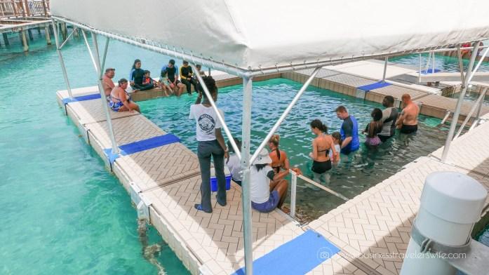 VIP Beach Day and Dolphin Encounter on Blue Lagoon Island, Bahamas Float Platform