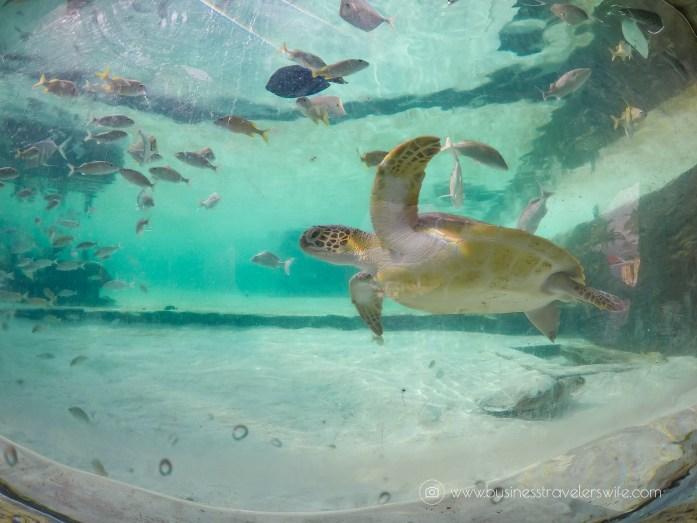 Grand Hyatt Baha Mar - A Grand Vacation in Nassau Bahamas Pool Rock Jump Aquarium