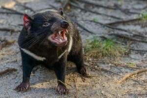 top ten endangered animals