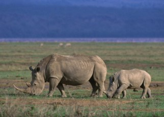 Ngorongoro Conservation remits $26m dividends to Tanzanian government
