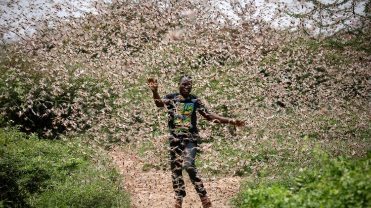 Oxfam has warned that the number of desert locusts that have invaded parts of East Africa may increase by 500 times should no control measure be taken.