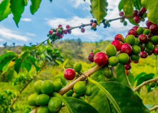 Kenya is host the East African Coffee Business Forum which is scheduled to commence on 11 to 14 February 2020 at the Coast Town of Mombasa.