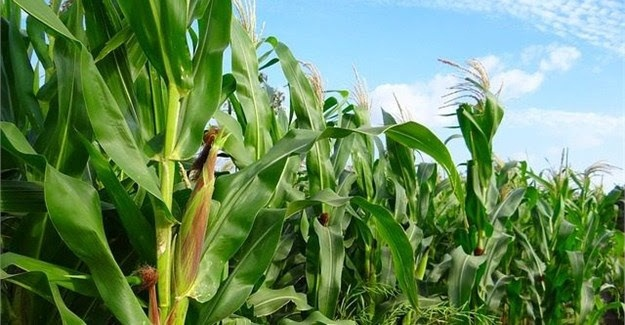 COMESA develops COVID-19 Regional Food and Nutrition Security Response Plan