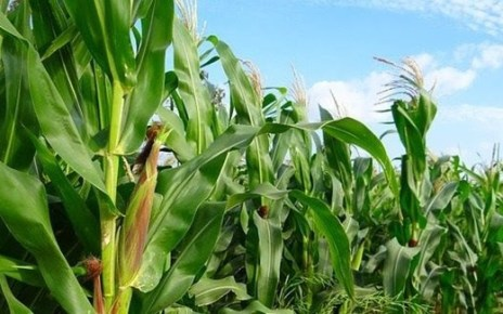 The COMESA Secretariat has developed a draft COVID-19 Regional Food and Nutrition Security Response Plan to improve agricultural productivity, enhance access to competitive markets and trade in agri-food commodities in the region.