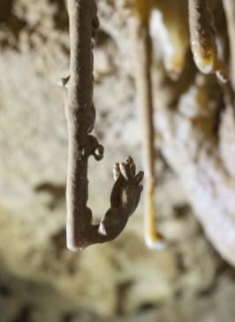 Nel Ramo del Cigno sono numerose le concrezioni eccentriche (foto Sandro Sedran S-Team)