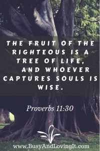 Proverbs 11:30 - The tree of life