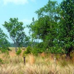 Bull Creek Cemetery Trail
