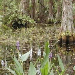 Sebastian River Buffer Preserve Trail