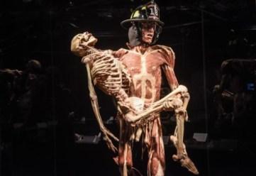 Genova, porto antico. Body Worlds. la mostra, ideata dal medico tedesco e scienziato Gunther von Hagens, che racconta il corpo umano attraverso l'osservazione di autentici corpi e campioni anatomici umani