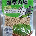 100均の種「猫草の種」でエン麦(カラス麦・オーツ)の育て方
