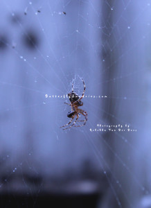 Beauty is everywhere, even in a spiderweb covered with dew or a spider (through the safety of a camera lens).