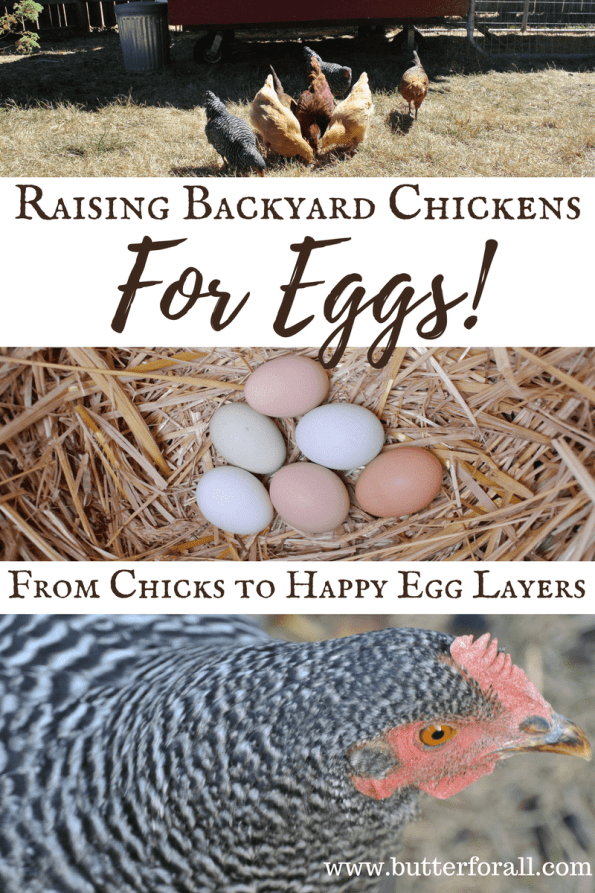 Learn how to raise happy, healthy egg layers.