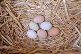 Blue, green brown and white eggs from my hens.
