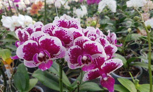 Met de Vuurtoren naar de Orchideeën hoeve