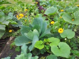 oogst en goudsbloemen
