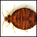 Bed Bugs PLR