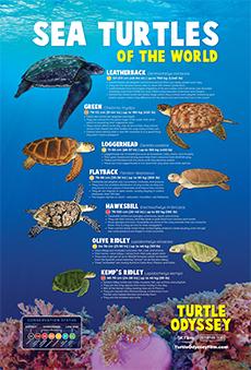 free sea turtle printables