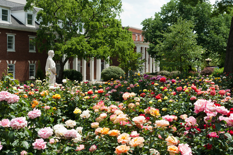 Image result for american rose society